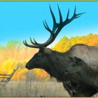 Марал - северный олень :: Андрей Заломленков