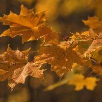 Уже румянит осень клёны... :: Альмира Юсупова