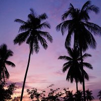 Thai :: Alex