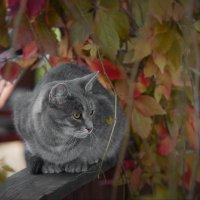 Кот с конюшни Аванпост. :: Igor Veter