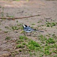птица :: petyxov петухов
