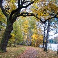 Пасмурный день золотой осени 3 :: Виталий