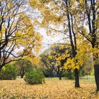 Пасмурный день золотой осени 2 :: Виталий