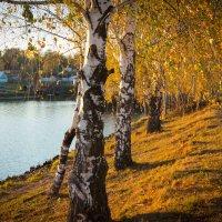 Вдоль реки :: Роман Царев