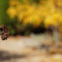 Осень в моём саду-3  (Окрябрь 2015) :: Karlina *** (Елена К)