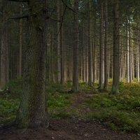 В лесу... :: Владимир Питерский
