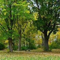 Жёлтый фон из листьев павших Ярче сказки... :: Galina Dzubina