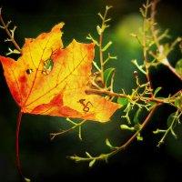 Зацепилась осень :: Alexander Andronik