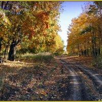 Лесные дороги :: Андрей Заломленков