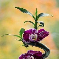 Орхидея на бамбуке :: Ирина Приходько