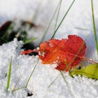 Осень-зима :: Андрей Куприянов