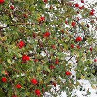Первый снег :: Валерий Талашов