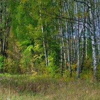 Грибные места Смоленщины :: Милешкин Владимир Алексеевич