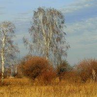 Осень. :: nadyasilyuk Вознюк
