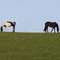 Ходят кони по краю Земли! :: Natalia Harries