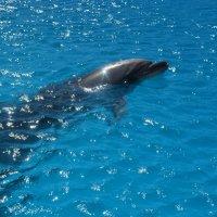 Дельфин :: Марина Юрочкина