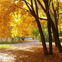 Осень золотая :: Александр Алексеев