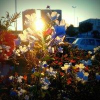 Городской закат :: Светлана marokkanka