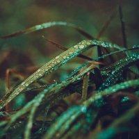 Трава у дома :: Евгения Языкова