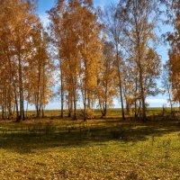 на поляне :: Николай Мальцев