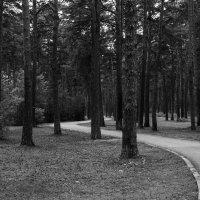 утро, лесо-парк) :: Дмитрий Сахнов