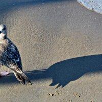 Чайка :: Анастасия Смирнова