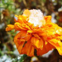 Как же ему холодно и мокро... :: Лидия (naum.lidiya)