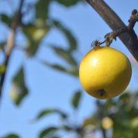 желтое яблоко :: xcom xcom