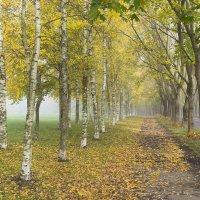 Дыхание октября :: Сергей Четвертной