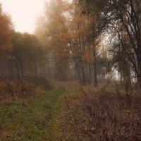 осень :: Дмитрий Булатов