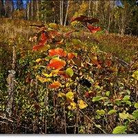 Осенняя палитра :: Любовь Чунарёва