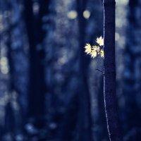 осенняя поэзия :: Alexander Asedach