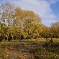 Лесные дорожки :: Наталия Григорьева