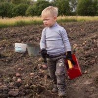 сбор урожая :: Александр Астапов