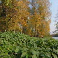 Жёлтое и зелёное. :: Oleg4618 Шутченко
