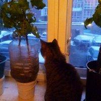 А за окном... :: Mary Коллар