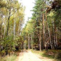 Дорога в смешанном лесу. :: Борис Митрохин