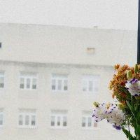 в окне :: павел