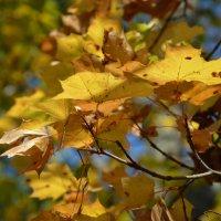 Осень, в которой его уже нет... :: Арина