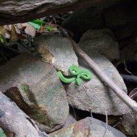 Оказывается настоящая змея, а я думала игрушка... :: Людмила Огнева