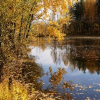 И в зеркало смотрелась осень... :: Наталия Григорьева