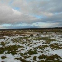 Таяние первого октябрьского снега на заливном лугу реки Вымь :: Николай Туркин