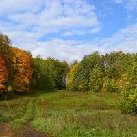 осенний лес :: Евгешка Храмова