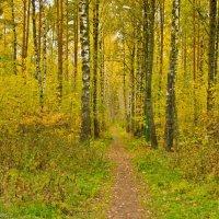 Тропинка в осеннем лесу. :: Виктор Евстратов