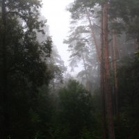 Туман в  соснах... :: Валерия  Полещикова