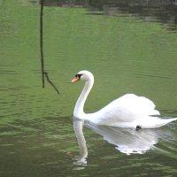Прекрасные птицы-6. :: Руслан Грицунь