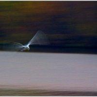 Призрачный полет :: Рамиль Хамзин