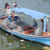 Вьетнамские рыбаки :: Людмила Огнева