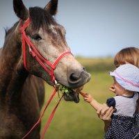 Самый аккуратный конь в мире))) :: Юлия Иванова