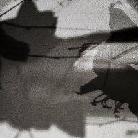Абстрактная композиция в черно-белом цвете :: Людмила Синицына